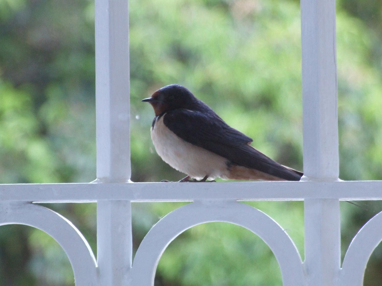 Oiseaux Chambre d'Hôtes Luxe Aude