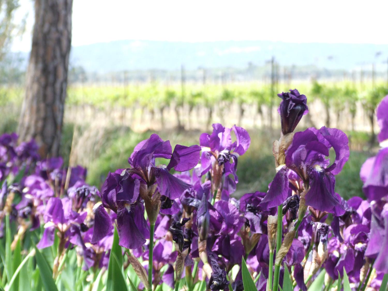 Fleurs Chambre d'Hôtes Luxe Aude